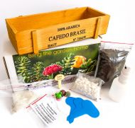 Succulent and Cactus Growing Kit, Unique Gift, Indoor Garden (Lithops, Echeveria, Cactus-)